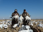 Morning results of our 2014 snow goose hunt