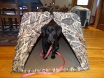 Gaddy starting to use a dog field blind.