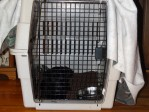 Gaddys Large pet travel crate