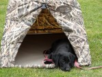 Gaddy using her field blind.