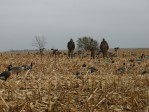 Moving the decoys after a wind change in North Dakota
