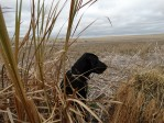 Gaddys First North Dakota Duck Hunt