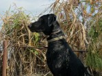 Gaddy Waiting on the ducks hunting Fish Point State Game Area
