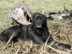 2011 North Dakota Waterfowl Hunt